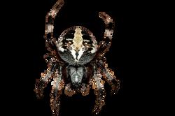 spider-195836_Clip