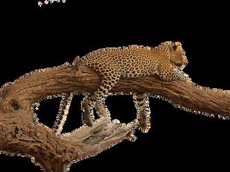 leopard-2668681__340.png