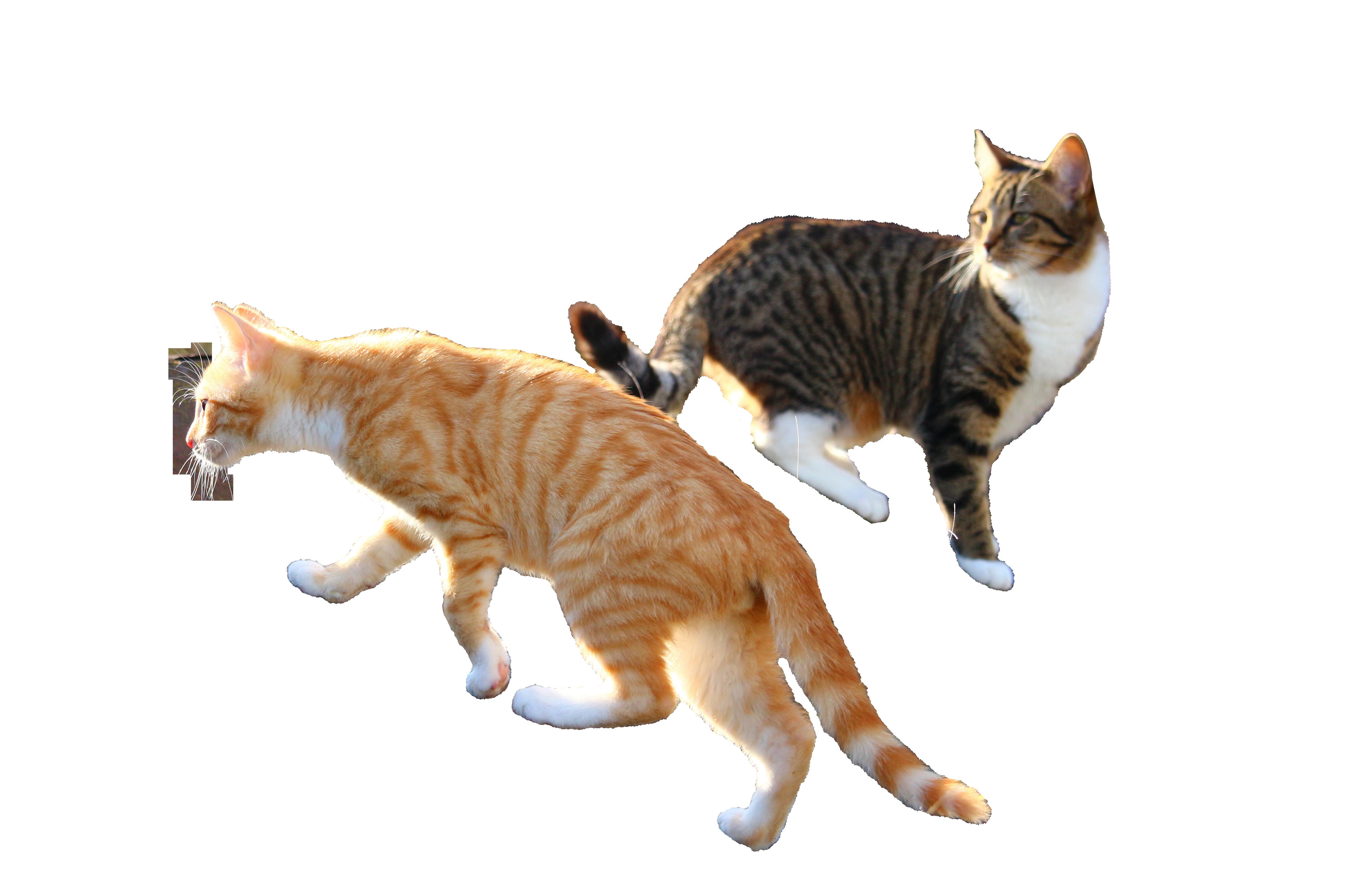 cat-1183095_Clip