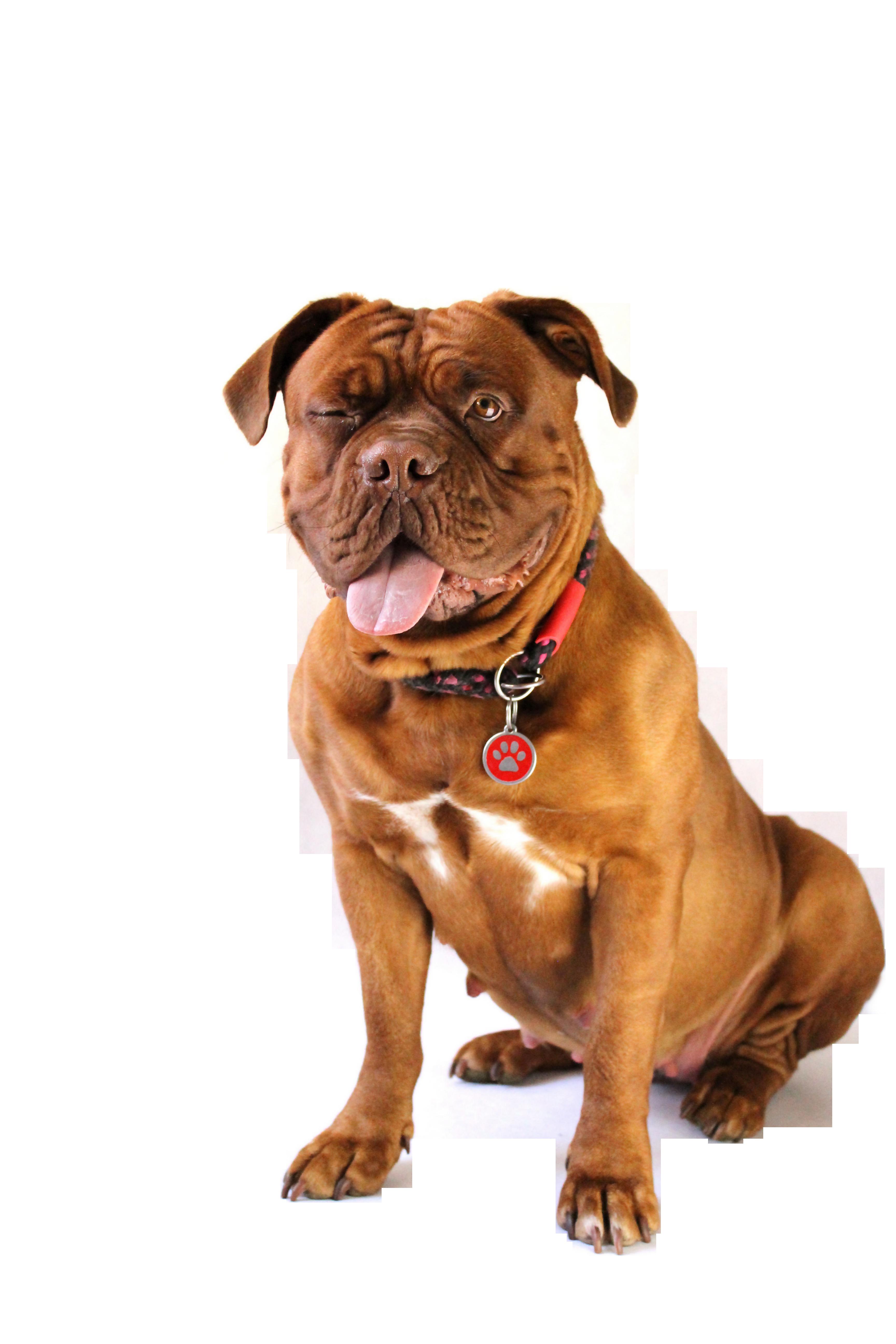 dog-794781_Clip