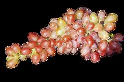 grape-186910_Clip