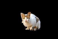 cat-72568_Clip