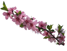 flowers-2194137__340.png