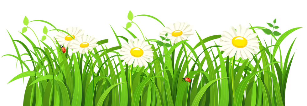 Grass-Vector-PNG-Transparent-Image-1.png