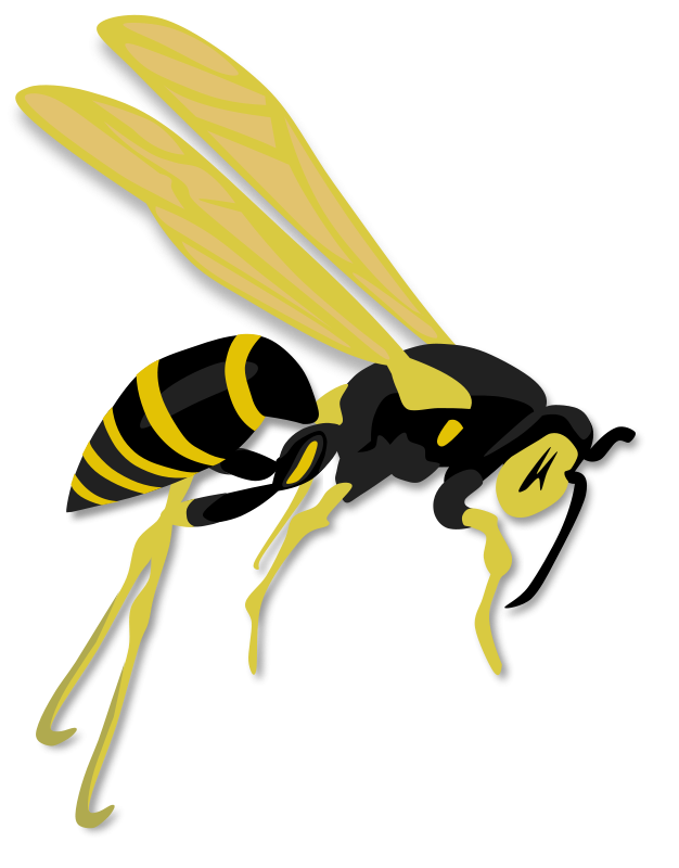 Gerald_G_Flying_wasp
