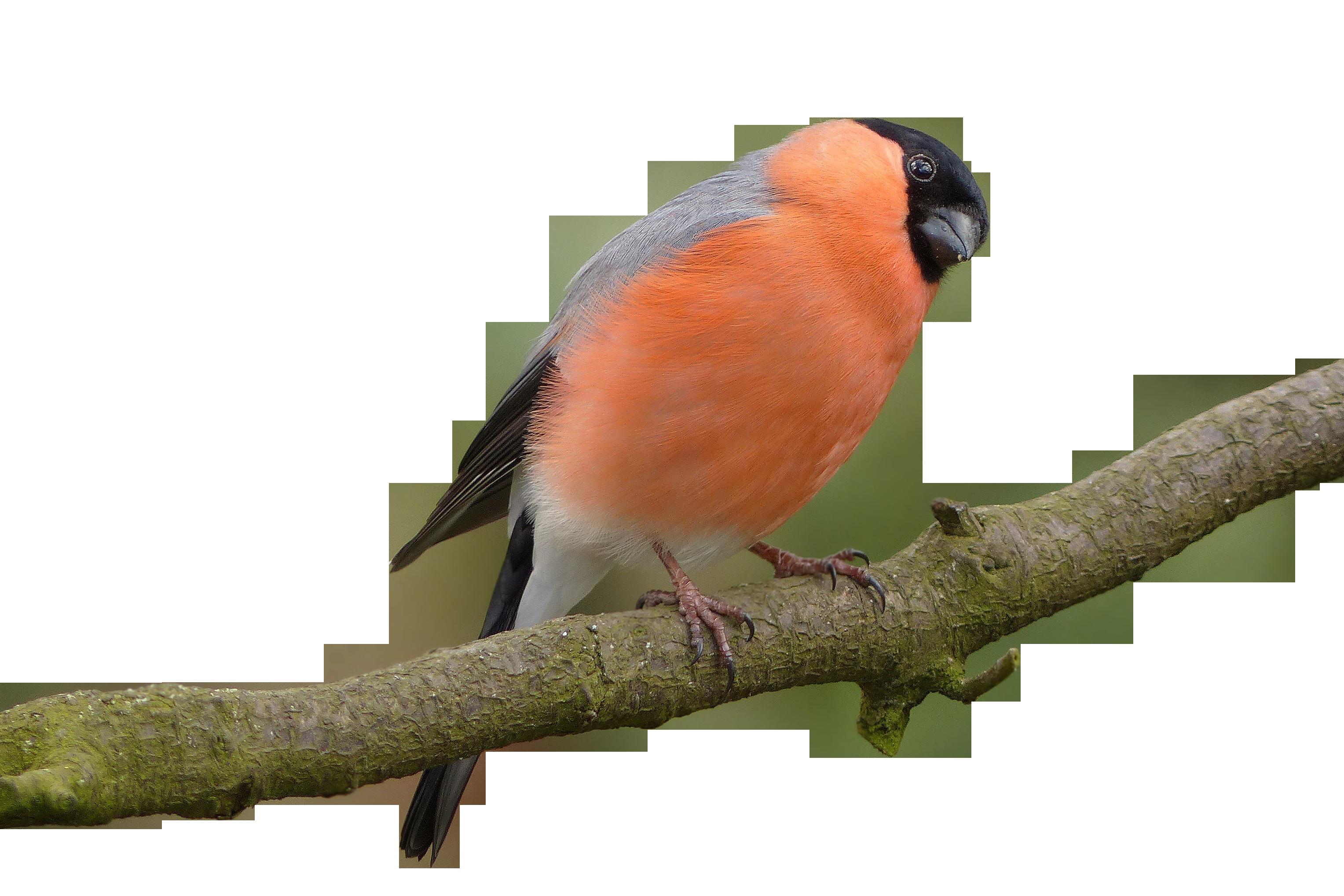 bird-757222_Clip