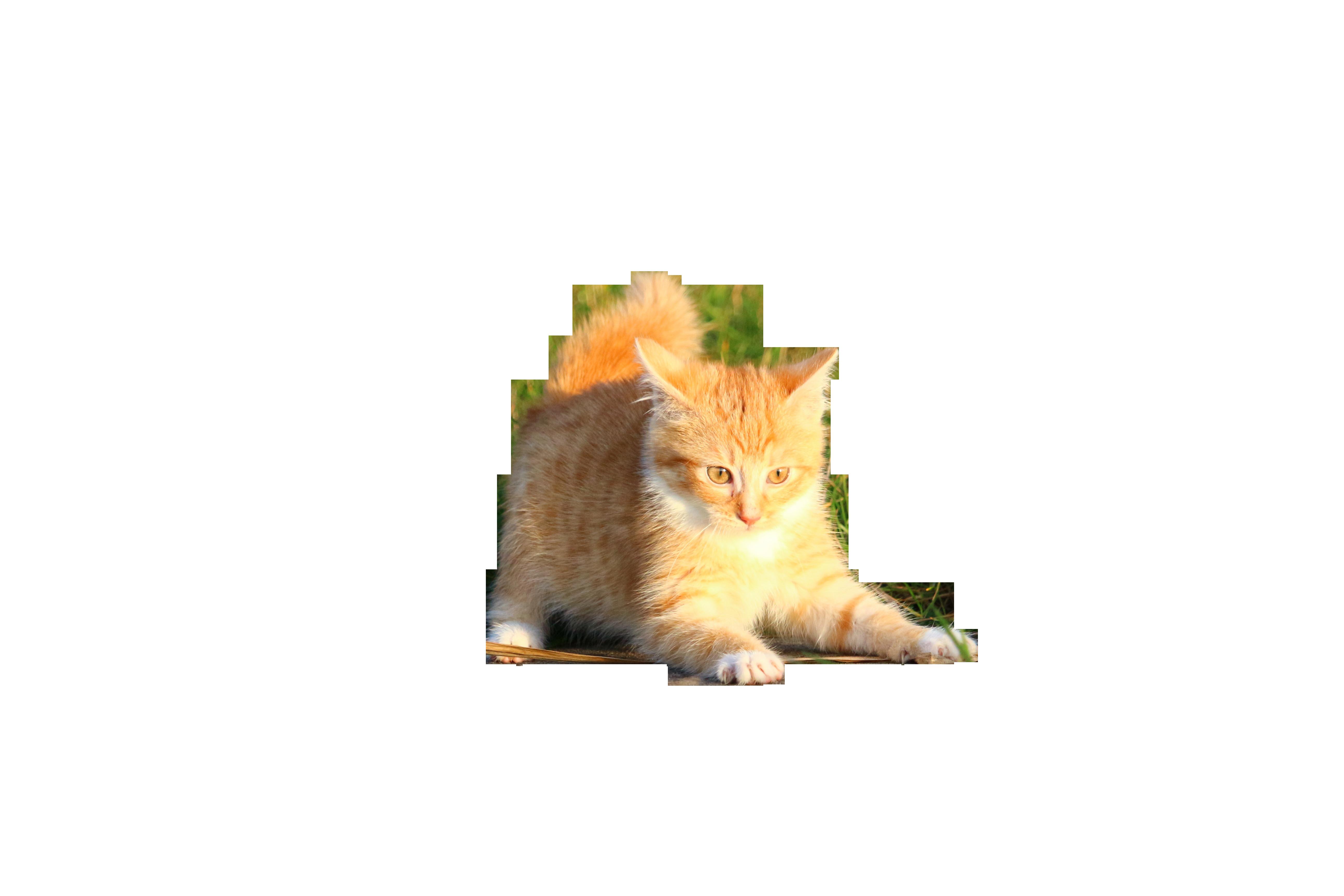 cat-1074784_Clip