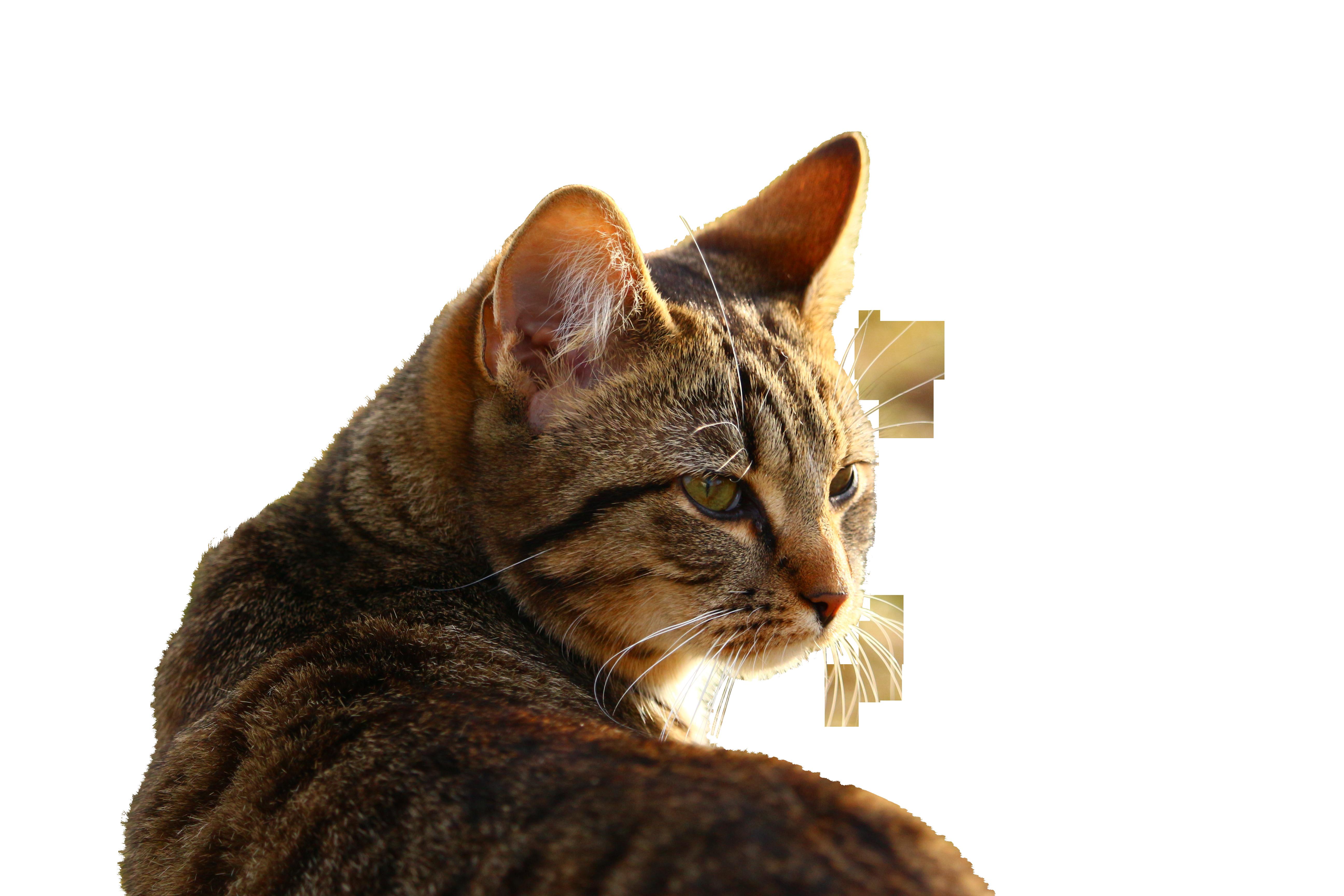 cat-1184719_Clip