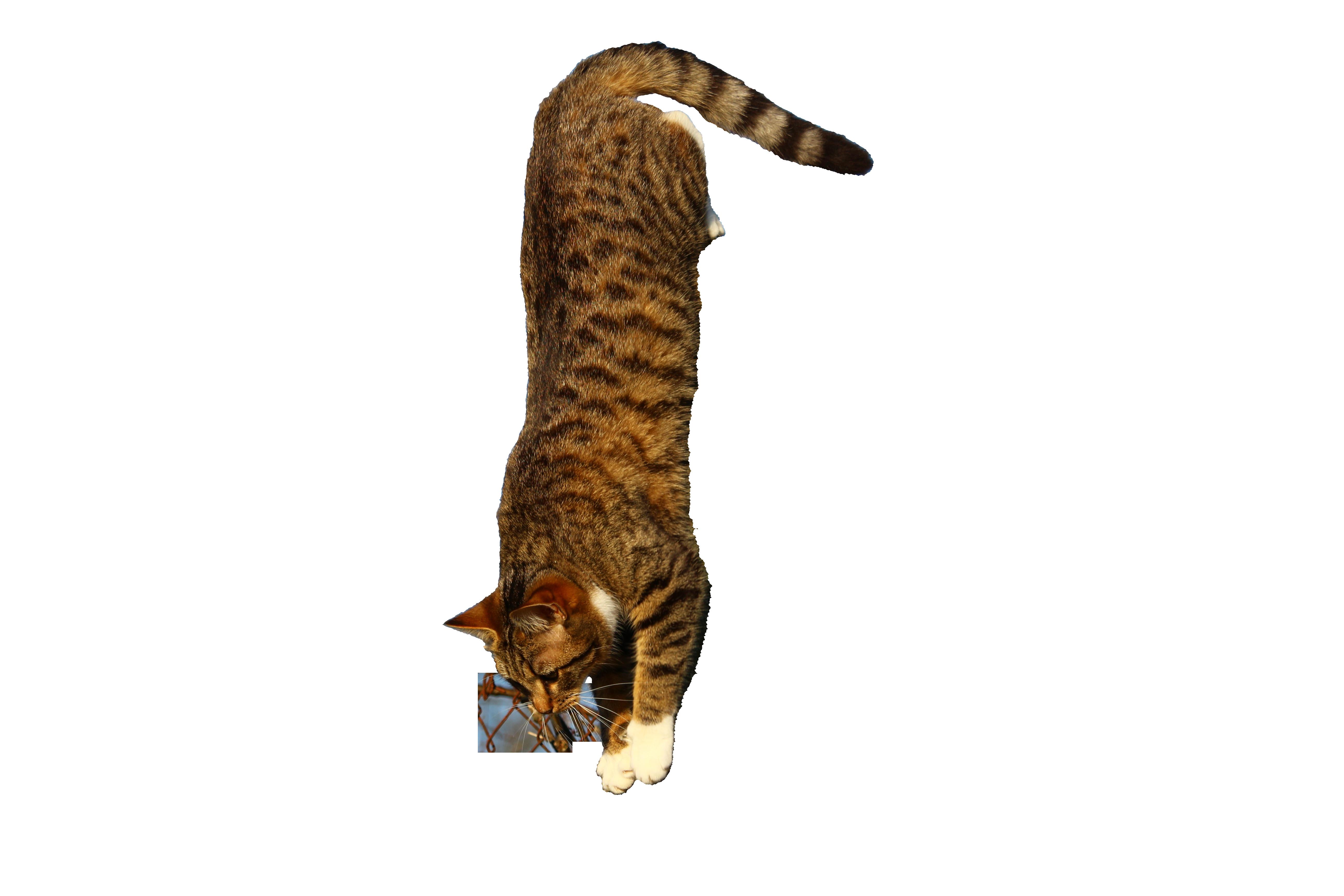 cat-1230269_Clip