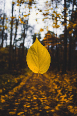 Cossyimages Autumn (60).jpg