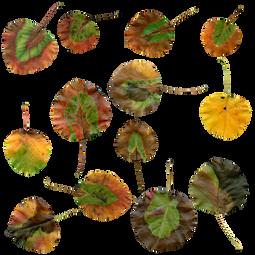 autumn-1726046_960_720.png