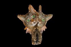 cat-697113_Clip