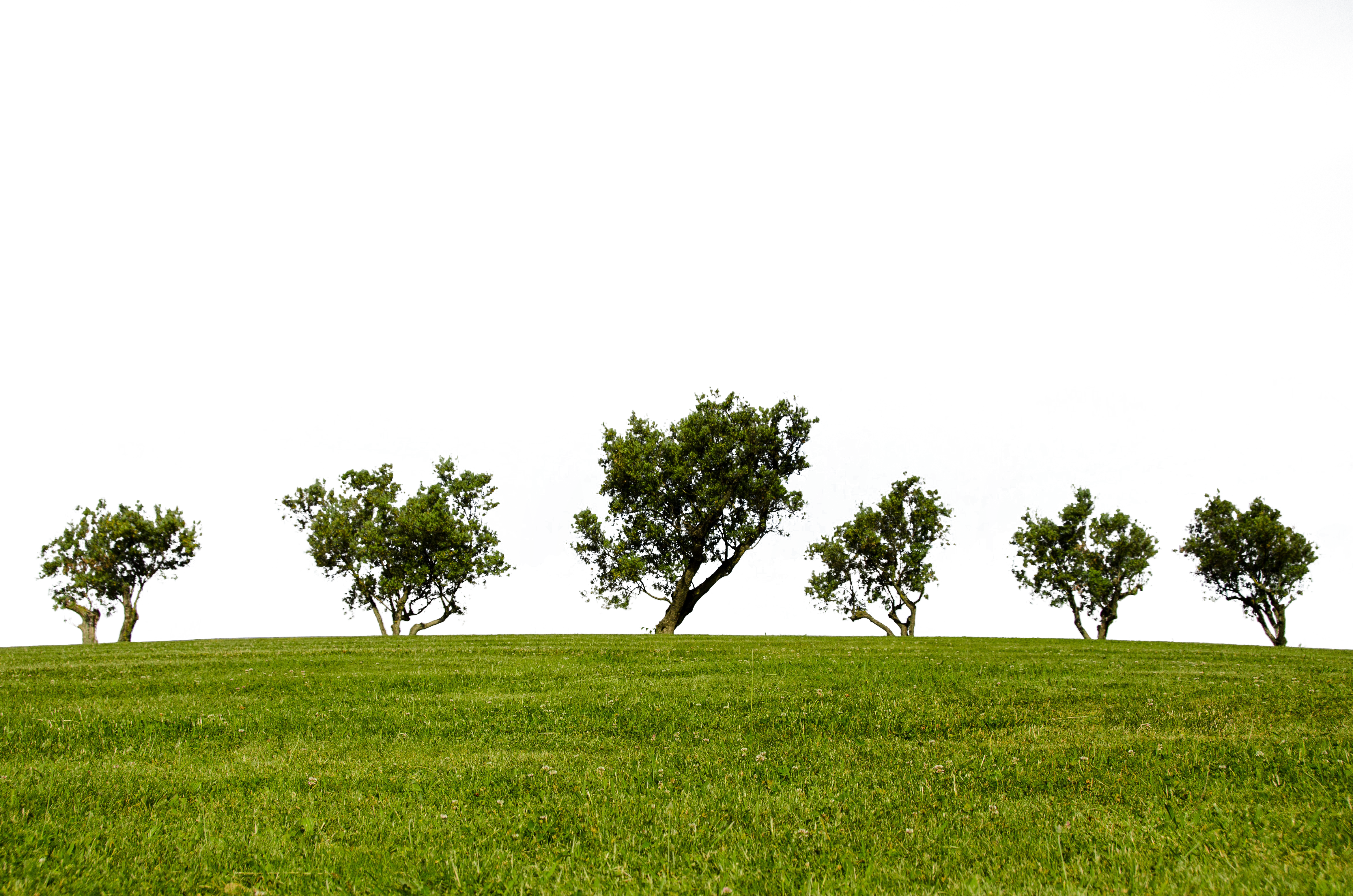 trees-790220_Clip