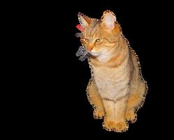 cat-1091482_Clip