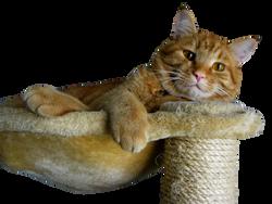 cat-968203_Clip