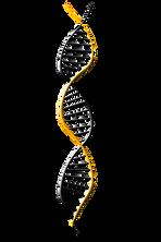 deoxyribonucleic-acid-1500067__340.png