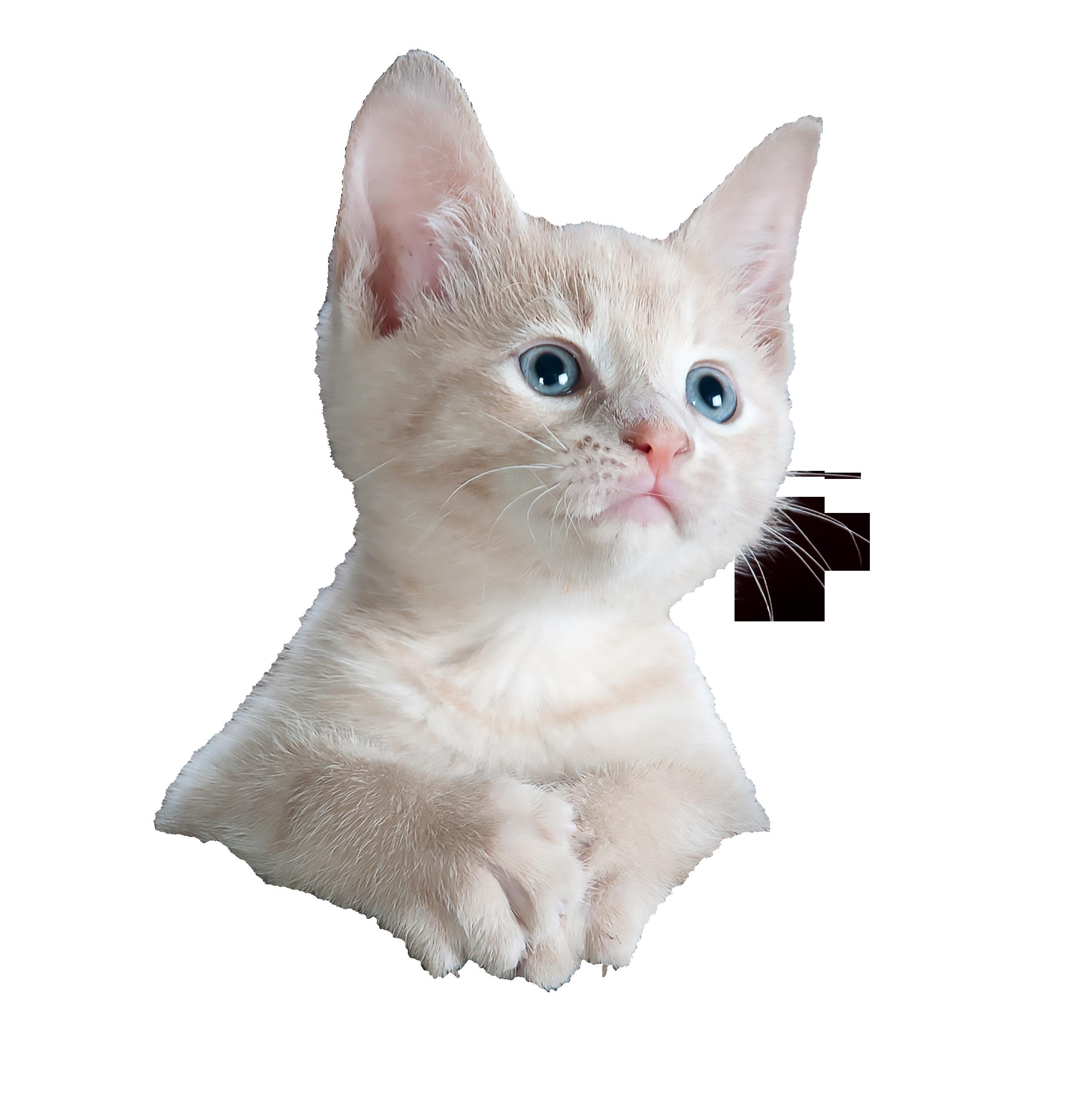 kitty-551554_Clip