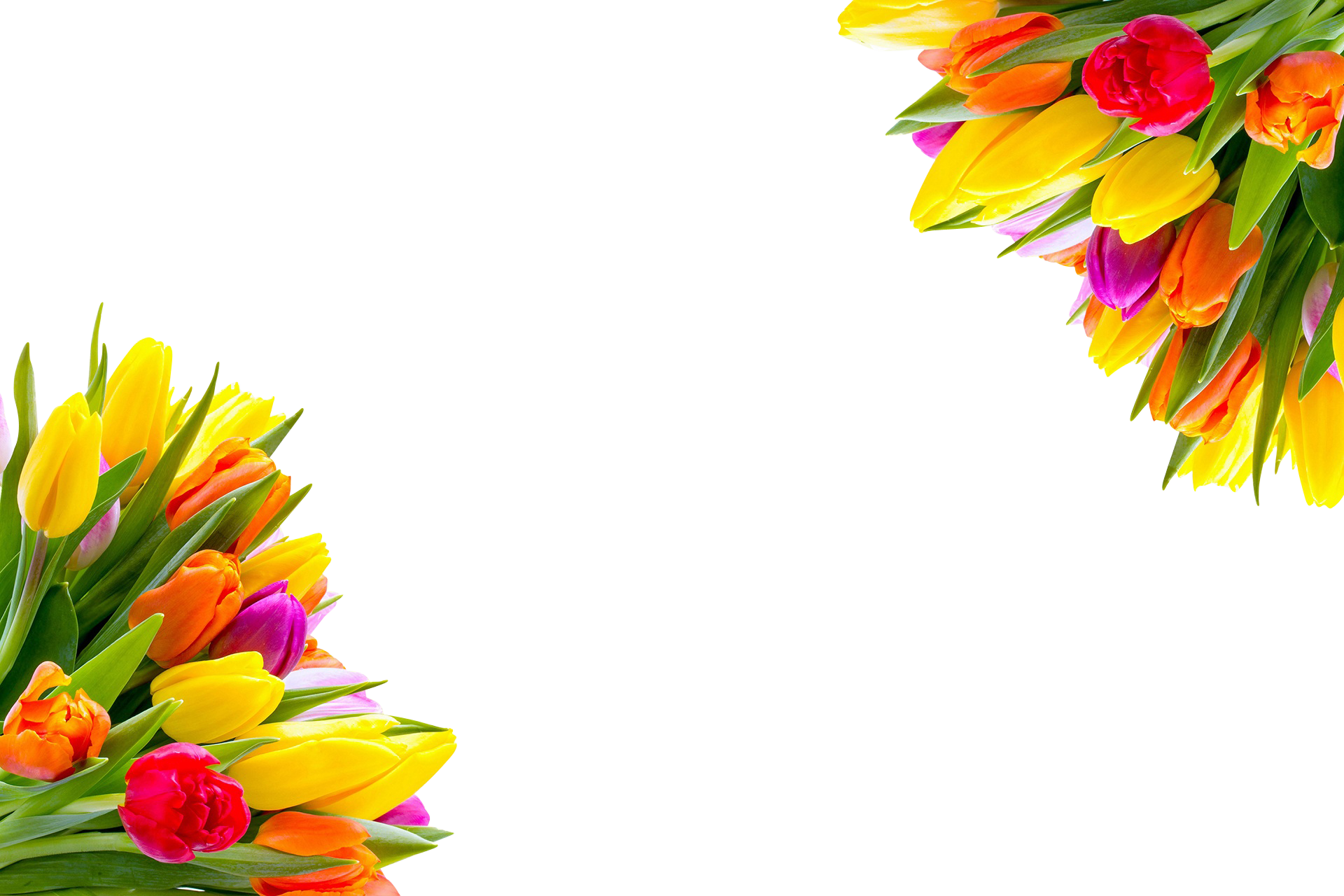 tulips-923203_Clip
