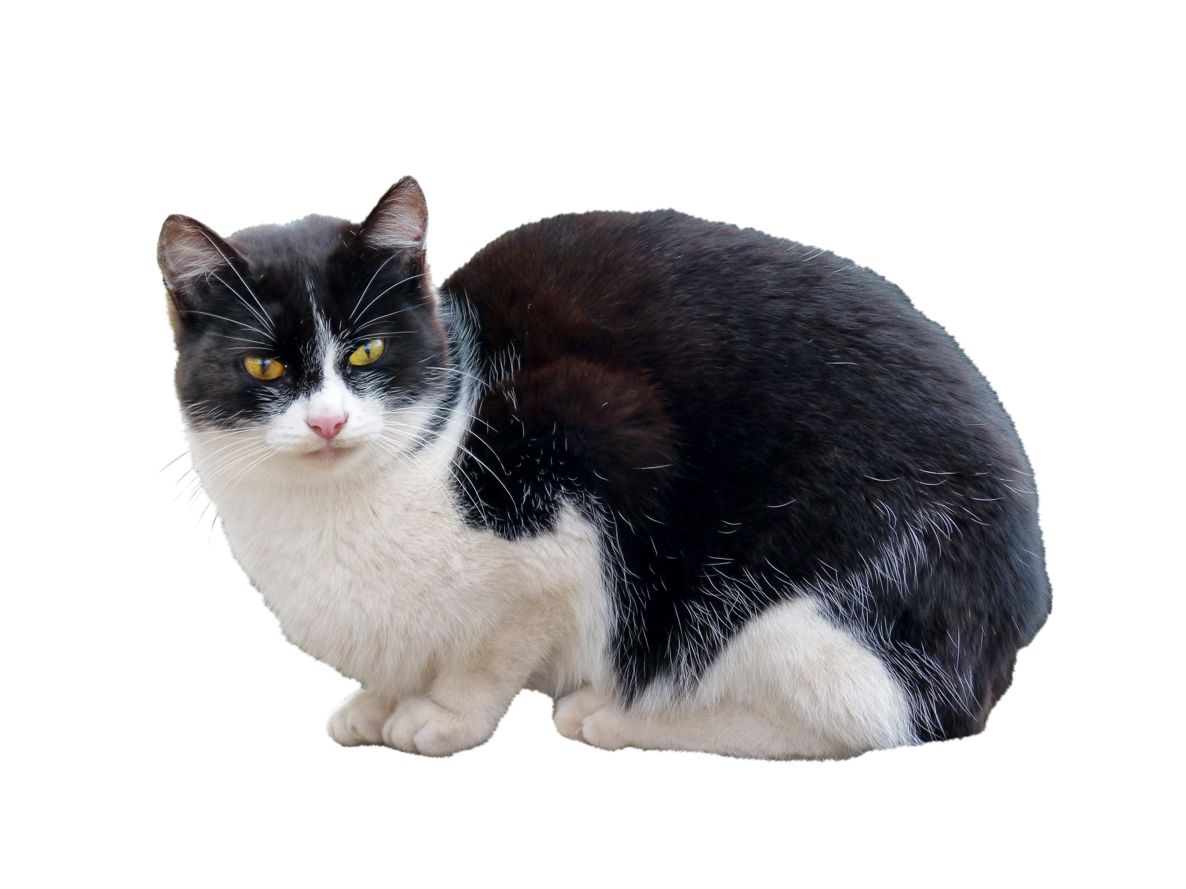 cat-1172265_Clip