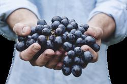 grapes-690230_Clip