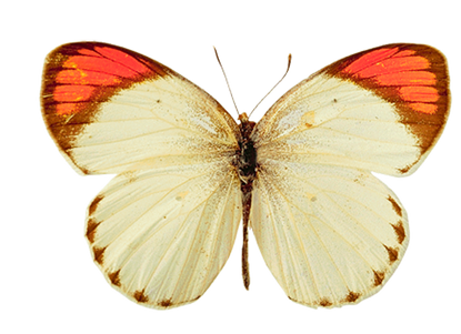 Check out the complete collection of insect free png images. On FreePNGs there is no download limit. Please see our FAQ if you have any questions on using this site.