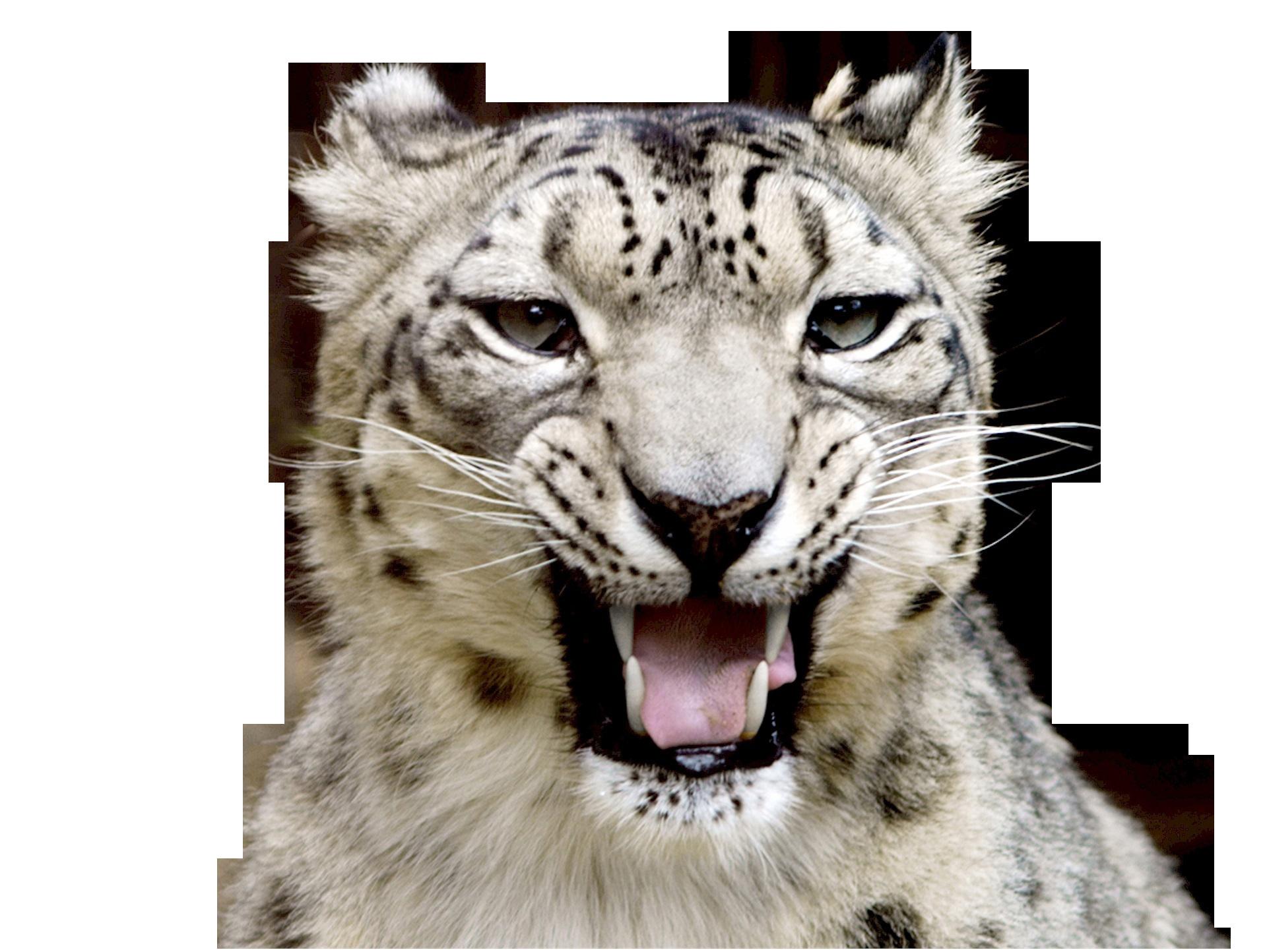 snow-leopard-620558_Clip
