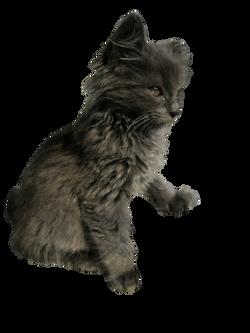 cat-968217_Clip