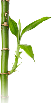 Bamboo (17).png