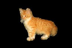 cat-1074644_Clip