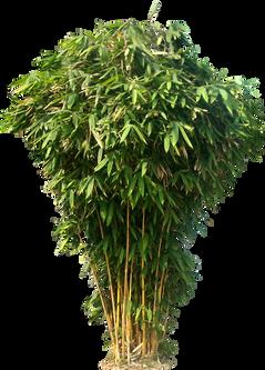 Bamboo (29).png