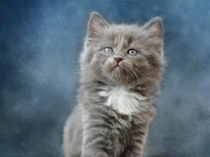 Cossyimages Kitten (14).jpg