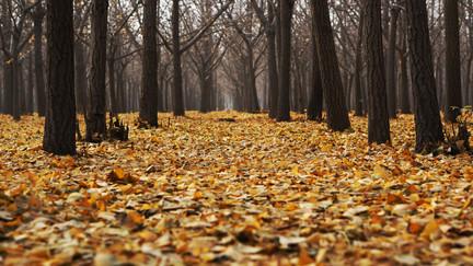 Cossyimages Autumn (6).jpg
