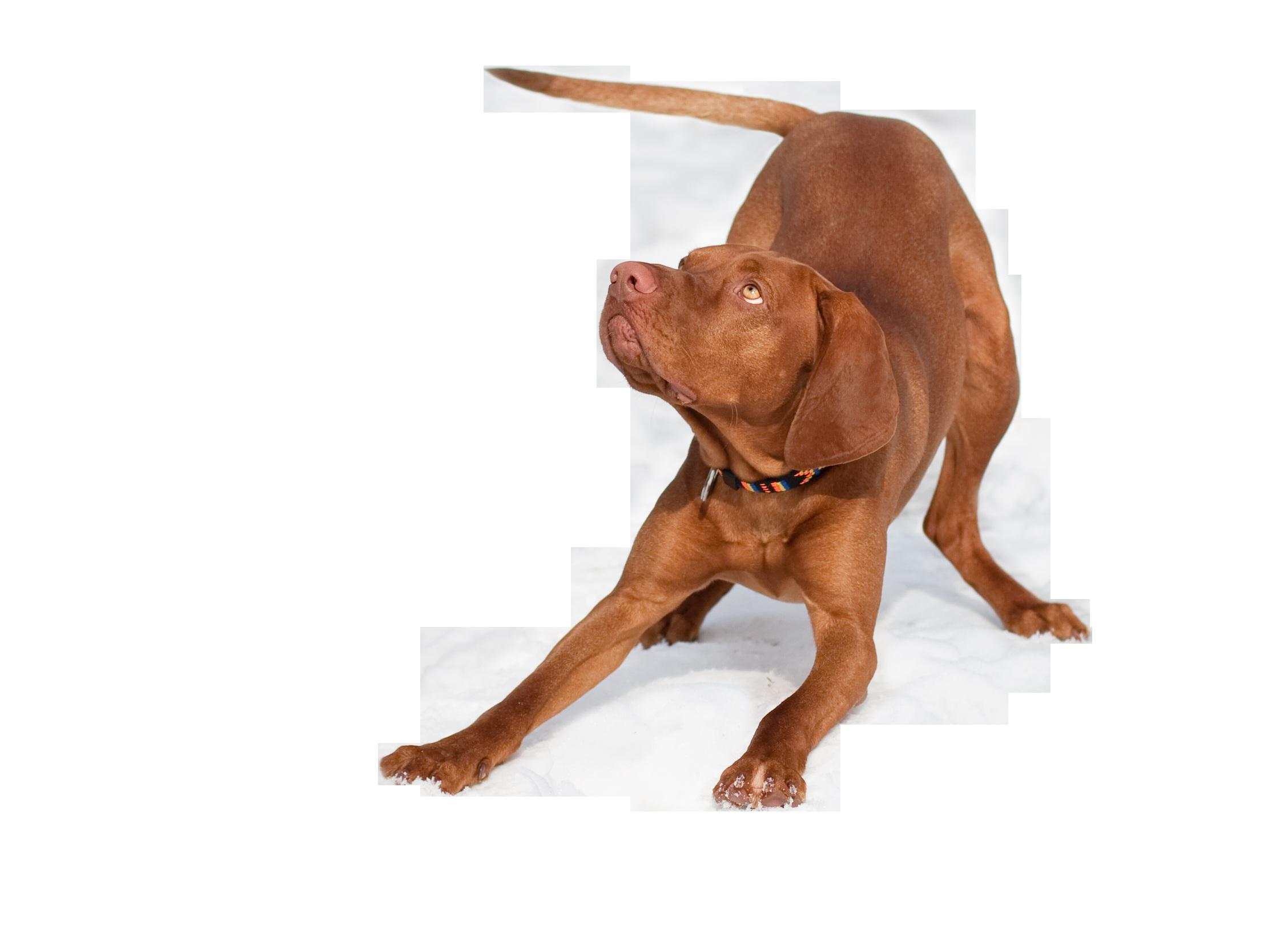 dog-1194082_Clip