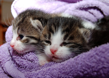 Cossyimages Kitten (20).jpeg