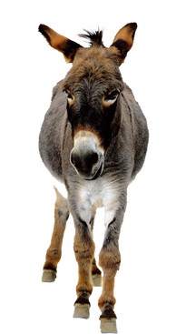Donkey PNG images