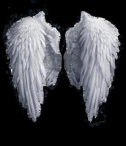 Wings-png-26