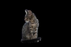 cat-902091_Clip