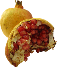 pomegranate-2201223__340.png