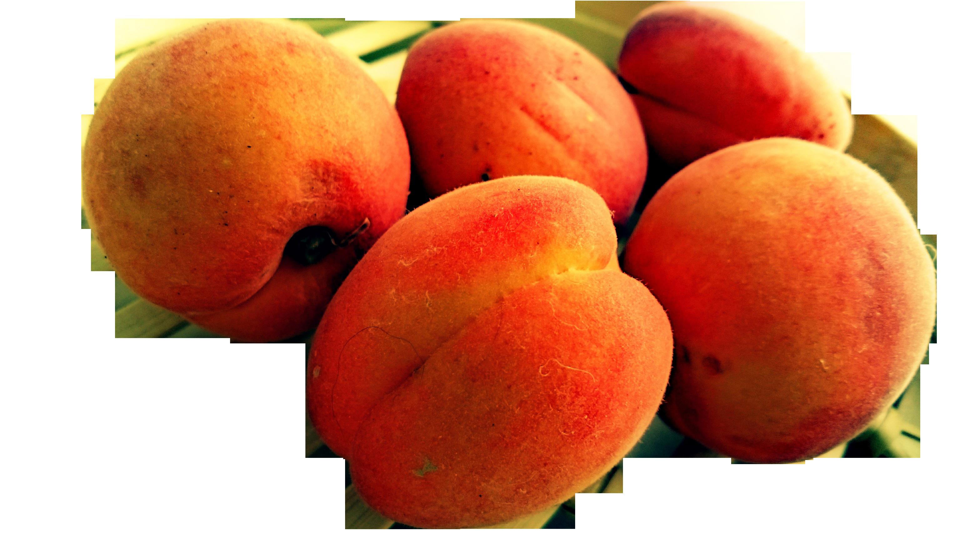 apricots-825094_Clip