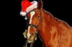 horse-1036122_Clip
