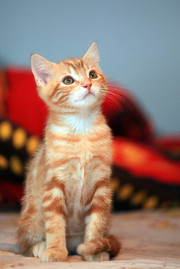 Cossyimages Kitten (18).jpg