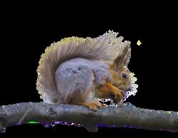 squirrel-815265_Clip
