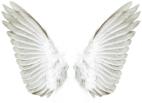 Wing-png-09