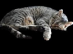 cat-582847_Clip