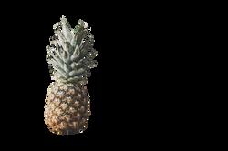 pineapple-1149533_Clip
