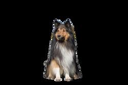 dog-1002029_Clip