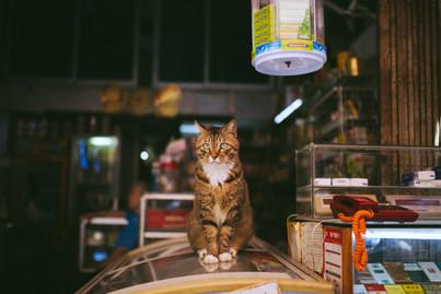Cossyimages Kitten (67).jpeg
