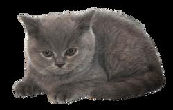 cat-1248019_Clip
