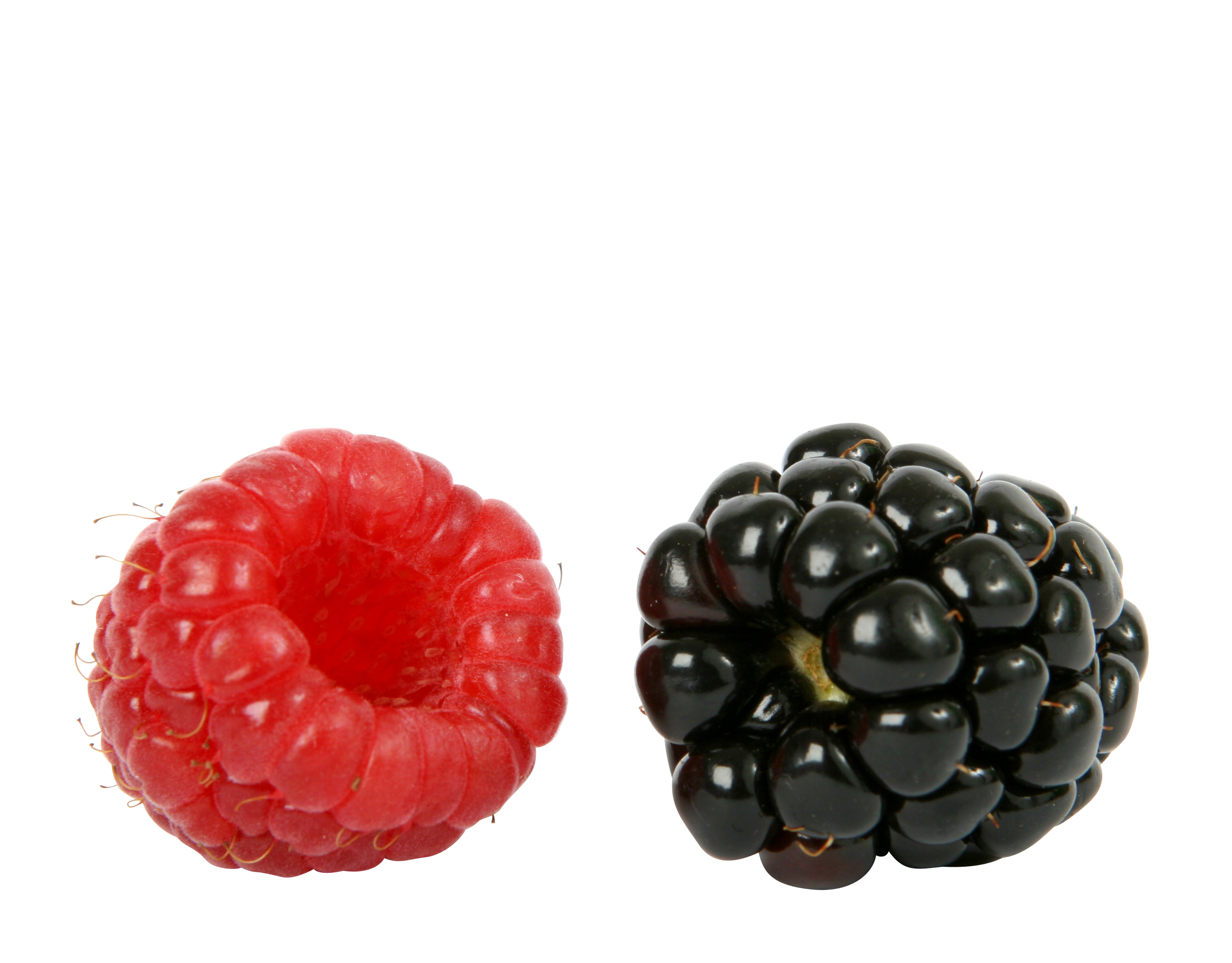 berry-1239103_Clip