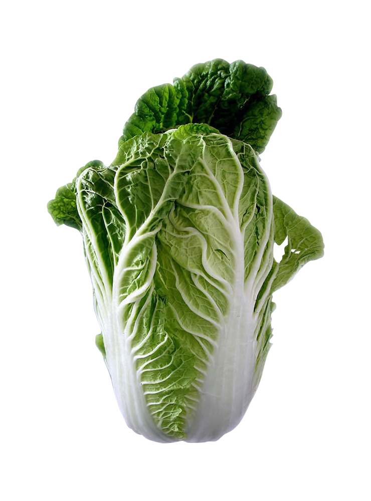 chinese-cabbage-74360_Clip